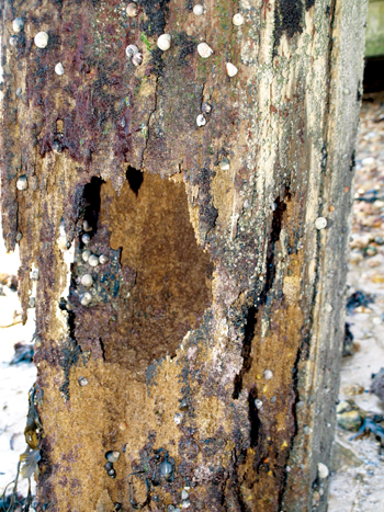 Wood infested by insect pests