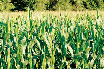 Cargill provides food, agriculture, financial and industrial products and services to the world
