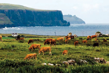 Record exports: Bord Bia recorded an 80 per cent increase in dairy exports from Ireland to the UAE b
